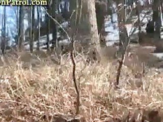 sexually excited pair banging in the woods