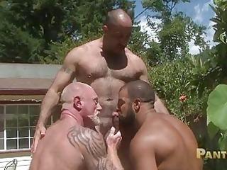 bearded homosexual bears share one giant meat